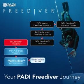 freediver flowchart